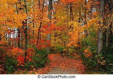 ősz festői