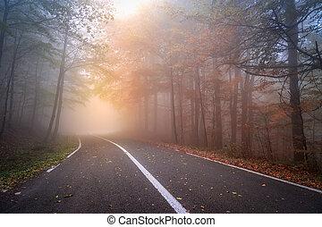 ősz, ködös, út, nap, aszfalt
