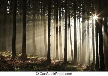 ősz, ködös erdő, napkelte