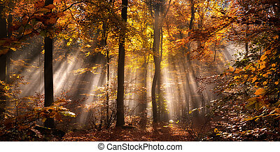 ősz, ködös, küllők, erdő, fény