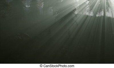ősz, köd, erdő, reggel