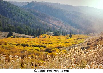 ősz, kaszáló