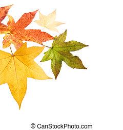 ősz kilépő, bukás