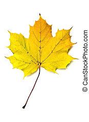 ősz lap, sárga, juharfa