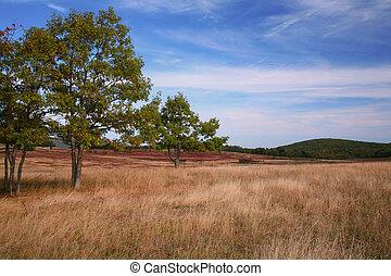 ősz, legelő, színhely