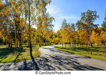 ősz, liget, napos nap