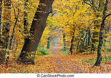 ősz, liget