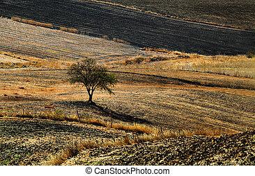 ősz, megfog, andalucia, vidéki, megszántott