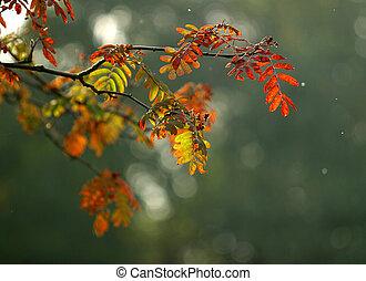 ősz, meleg