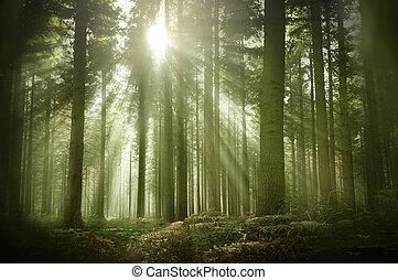 ősz, napfény, öreg, erdő, sóvárog