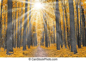 ősz, nature., erdő