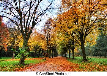 ősz, sáv, színezett