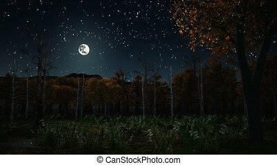 ősz, sötét, kísértetjárta, 4k, éjszaka, erdő