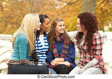 ősz, tizenéves, csoport, beszélgető, ülés, liget, lány, bírói szék, négy