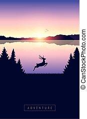 őz, tó, természet, ugrás, napnyugta