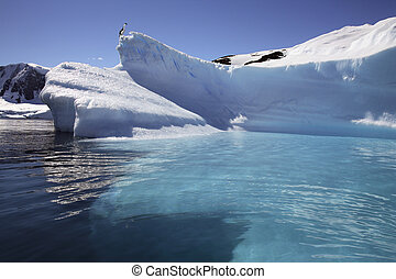 -, öböl, félsziget, antarktisz, paradicsom, antarktisz