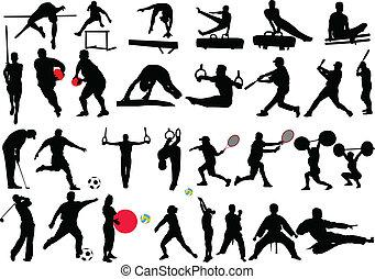 -, különböző, vektor, sport, gyűjtés