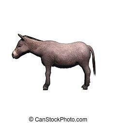 -, major állat, white háttér, elszigetelt, szamár