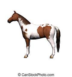 -, major állat, white ló, háttér, elszigetelt