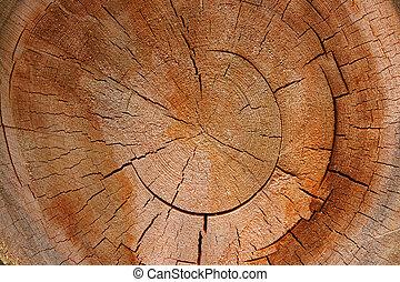 -, szakasz, fa, kereszt, növekedés létrafok, kör alakú