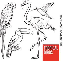 -, tukán, kolibri, madarak, színes, egzotikus, ara papagáj, flamingó, tropikus