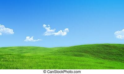 -, zöld kaszáló, gyűjtés, természet