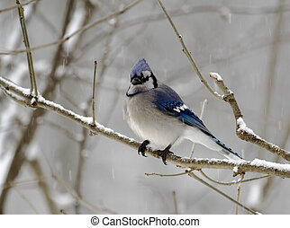 2, bluejay, nap, havas