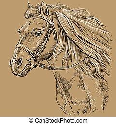 21, barna ló, portré