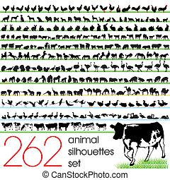 262, körvonal, állhatatos, állat