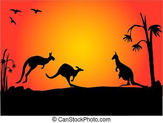 3, napnyugta, kenguru