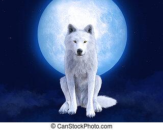 3, vakolás, moonlight., farkas, fehér, méltóságteljes