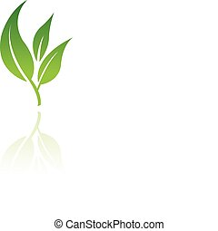 8, levél növényen