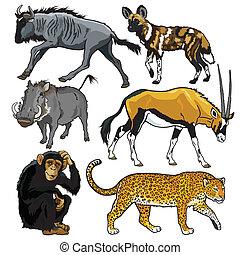 afrika, állhatatos, állatok