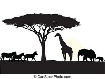 afrika, háttér, árnykép