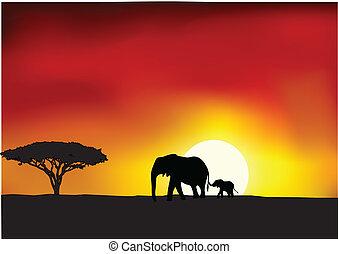 afrika, napnyugta