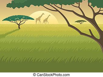 afrika, táj