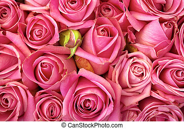 agancsrózsák, ágy