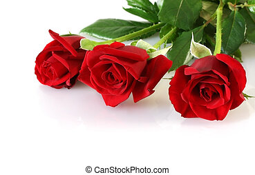 agancsrózsák, három, piros