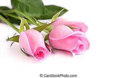 agancsrózsák, három, rózsaszínű