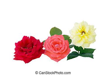 agancsrózsák, három