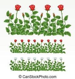 agancsrózsák, határ