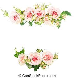agancsrózsák, ibolya, virágzó