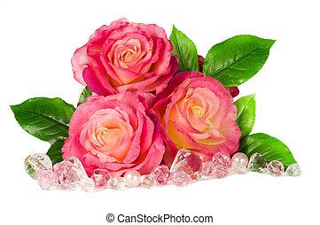 agancsrózsák, rózsaszínű, elszigetelt