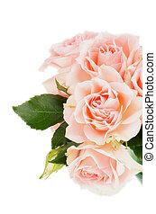 agancsrózsák, rózsaszínű, krém