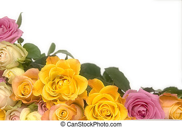 agancsrózsák, rózsaszínű, sárga