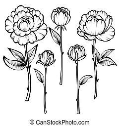 agancsrózsák