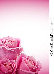agancsrózsák, romantikus