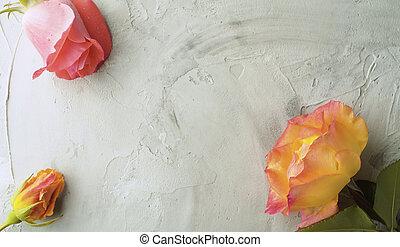 agancsrózsák, sárga, rózsaszínű