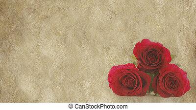 agancsrózsák, transzparens, pergament