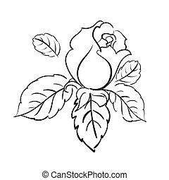 agancsrózsák, virágzó